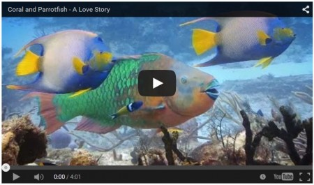Coral the Parrotfish a love story