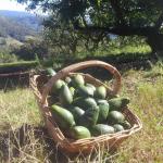 Casa de Maylen Organic Farm