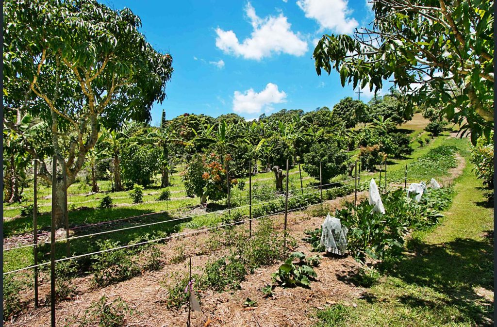 Farm for sale - fruit trees
