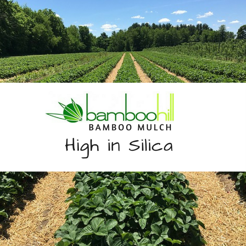 BambooHill Bamboo Mulch - High in Silica