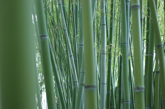 BambooHill Bamboo Mulch