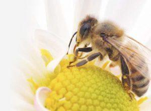 QueenBEE bee