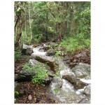 Organic Property for sale - creek
